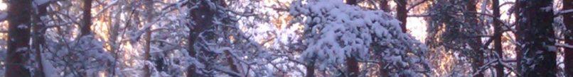 cropped-imag0953.jpg