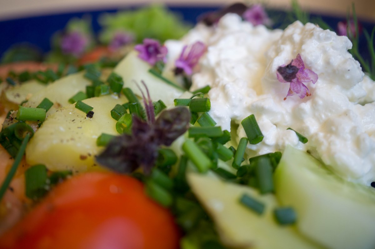 Cottage Cheese and Potato Salad. Kodujuustu ja kartulisalat
