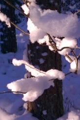 talv1