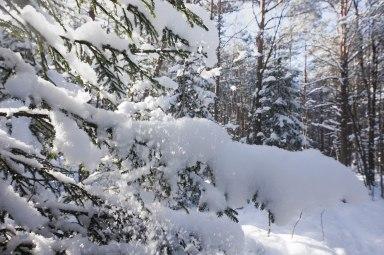 winterinestonia (13)