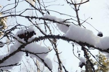 winterinestonia (21)