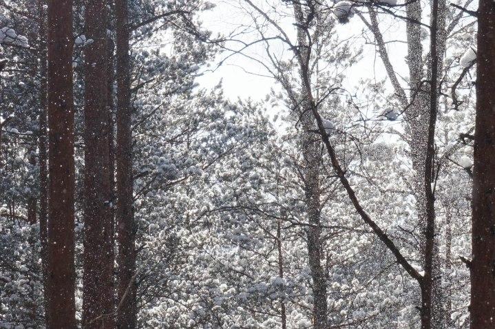 winterinestonia (40)