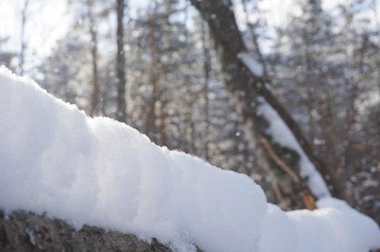 winterinestonia (6)