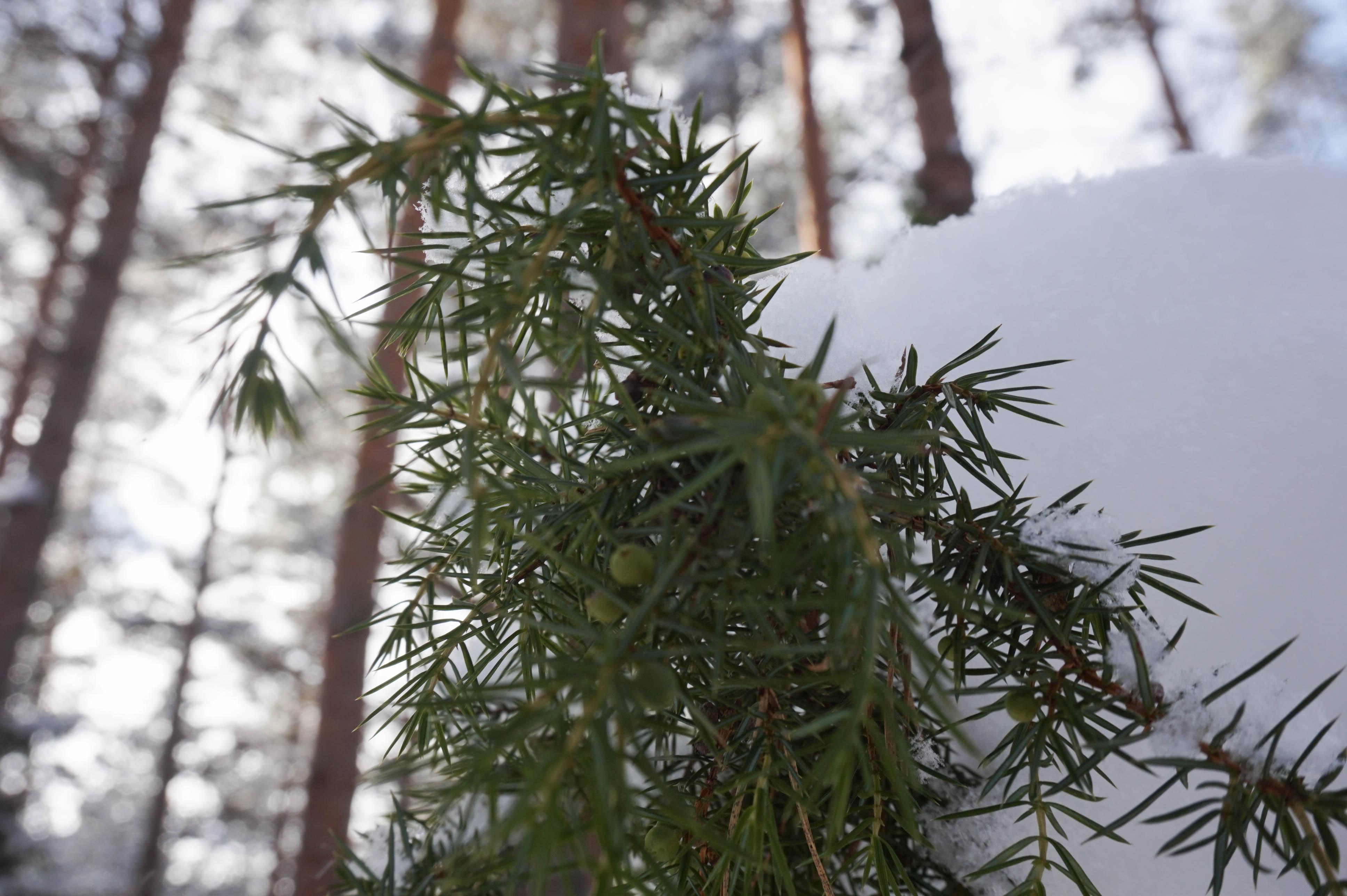 winterinestonia (65)