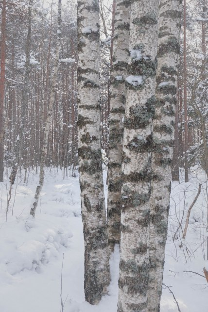 winterinestonia (9)