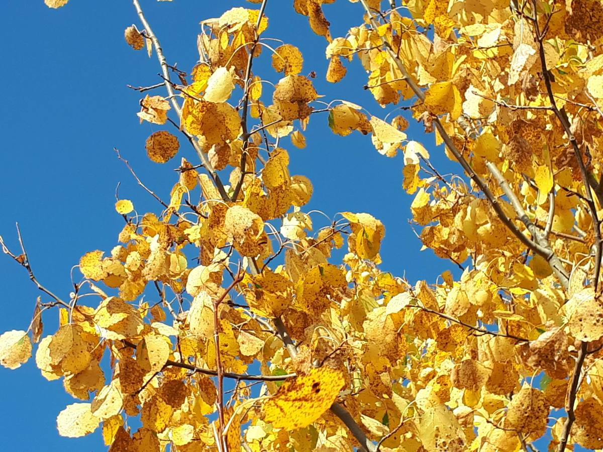 Golden. Autumn.